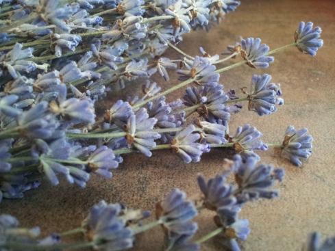 flori-lavanda