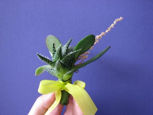 cocarda succulent